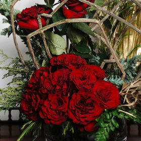 Hearts Rose Rosaprima variety for National Red Rose Day